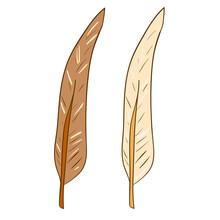 Bird Feathers Vector Art Isola...