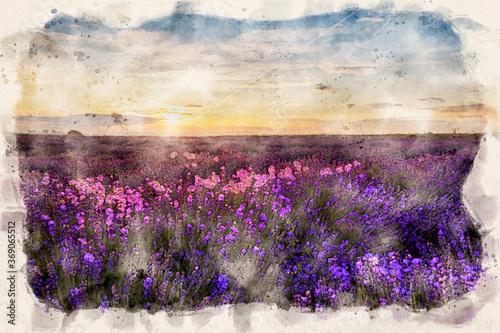 Obraz Beautiful lavender field sunset landscape - waterpaint - fototapety do salonu