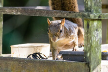 Beautiful Brown Squirrel On Fr...