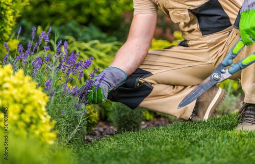 Obraz Caucasian Gardener and the Garden Maintenance Job - fototapety do salonu