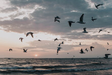 Seagulls Chasing The Sunset Over The Shore Of Lake Erie