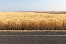 Wheat Field And Farmland In Su...