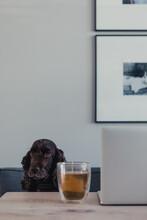 Cute Portrait Of A Dog Sitting...