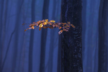 Yellow Branch On A Blue Forest Background.
