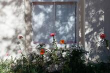 Rambling Garden