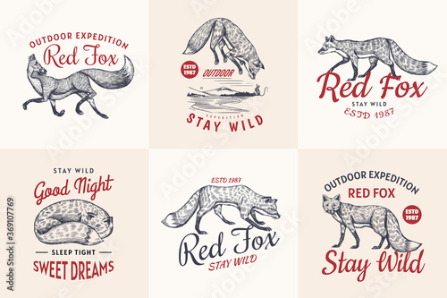 Photo Red fox badges set
