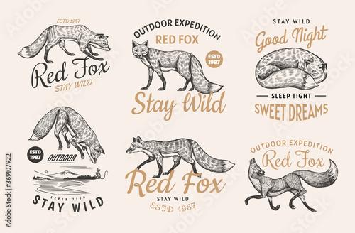 Fototapeta Red fox badges set. Forest ginger wild animal label or logo. Vector Engraved hand drawn Vintage old sketch for stamp, t-shirt or typography. obraz