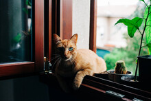 Cat Sitting At The Window