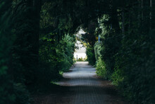 A Walkway Surrounded By Trees