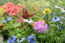 Schmetterling 684