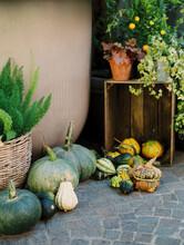 Autumnal Pumpkins Still Life