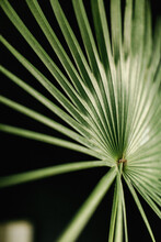 Close Up Of Palm Frond