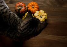 Cat And Pumpkins
