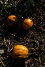 Twilight Pumpkin Patch