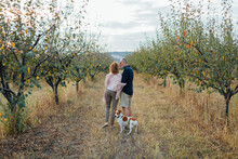 Senior Couple In The Orchard