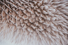 Close Up Of Horse Fur During R...