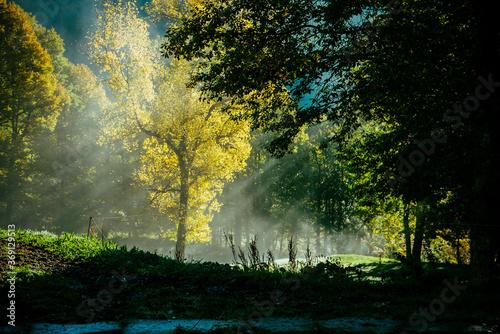 Magic autumn light on golden trees