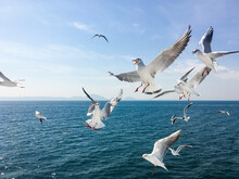 Group Of Seagull Flying In The...