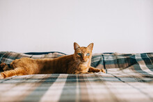 Ginger Cat At Bed