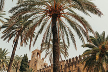 Landscape Of Palm Trees And St...