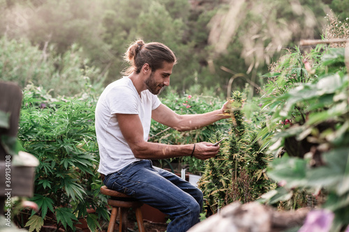 Fotografie, Obraz Man taking care of weed in garden