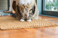 Cat Paws On Mat