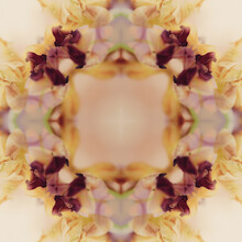 Beautiful Kaleidoscope A Flower Floral Pattern Bg