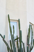 Cactus Growing In Front Of White Building