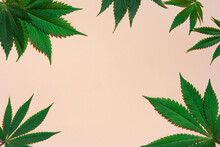 Cannabis Leaves On Pink