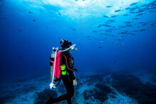A Female Scuba Diver Watching Schooling Yellow Fin Tuna In The Blue