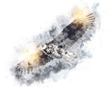 Bald Eagle Swoop Landing Hand ...