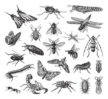 Insect Collection - Vintage En...