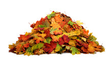 Pile Of Autumn Colored Leaves ...