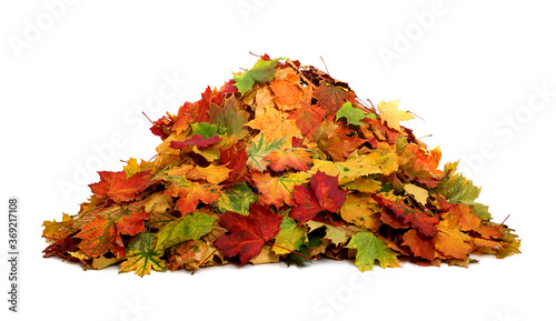 Pile of autumn colored leaves isolated on white background Canvas Print