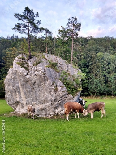 Two cows next to a big stone, Germany, Berchtesgaden Wall mural