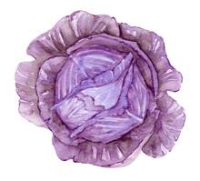 Red Cabbage Watercolor Illustration. Garden Vegetables, Harvest. Salad, Ingredient, Healthy Vegan Food, Agriculture.