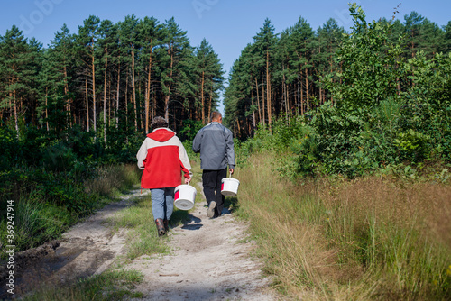 Obraz People are resting and picking mushrooms in the forest - fototapety do salonu
