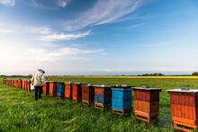 Beekeeper Or Apiarist Working ...