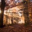 jambes de soleil dans les bois