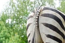 Zebra Ass Or Zebra From Behind...