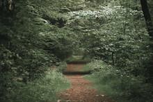 A Nice Walk Through The Green ...