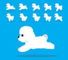 Animal Animation Sequence Dog Bichon Frise Cartoon Vector