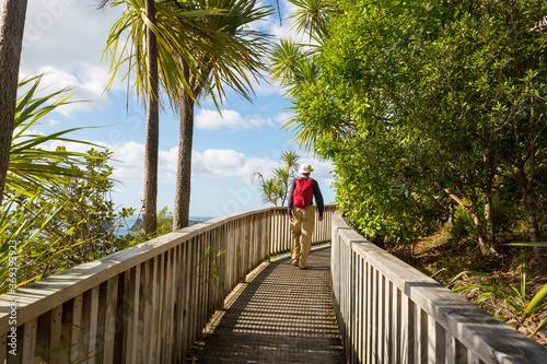 Obraz Boardwalk in New Zealand coast - fototapety do salonu