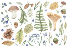 A Large Set Of Hand-drawn Illustrations On An Autumn Forest Theme. Blueberries, Leaves, Mushrooms, Nuts, Acorns, Feathers, Blades Of Grass, Pine Cone For Design, Cards, Stickers, Decoration, Books.