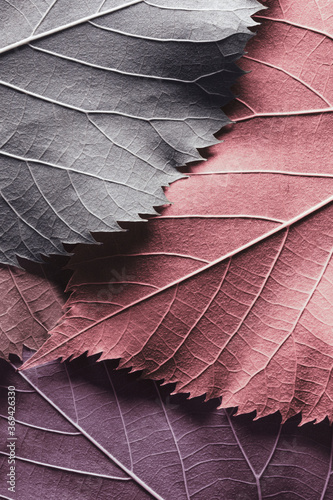 Macro colorful leaves, texture background