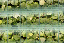 Green Summer Leaves Behind A Metal Wire Mesh