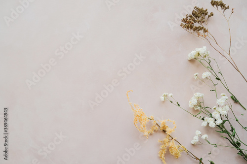 Fototapeta Twigs of dried flowers on pastel pink backdrop. Copy space. obraz