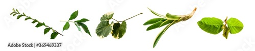 Obraz Collection isolated nature leaves on white background for design elements. - fototapety do salonu