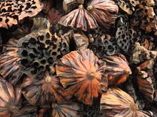 The Background And Texture Of Dry Seedpod Of Lotus