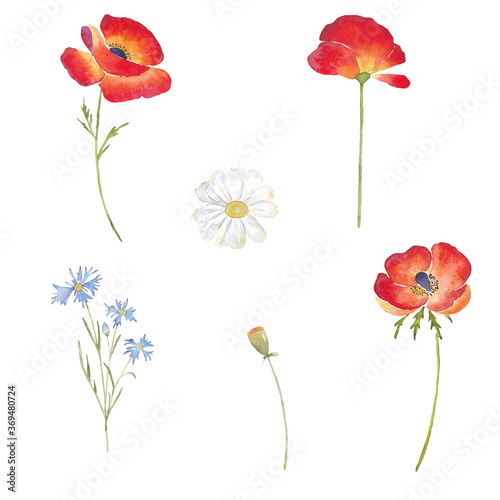 Paint set of hand-drawn watercolor red poppy flowers, daisy and cornflowers  on a white background. Use for menus, invitations, wedding